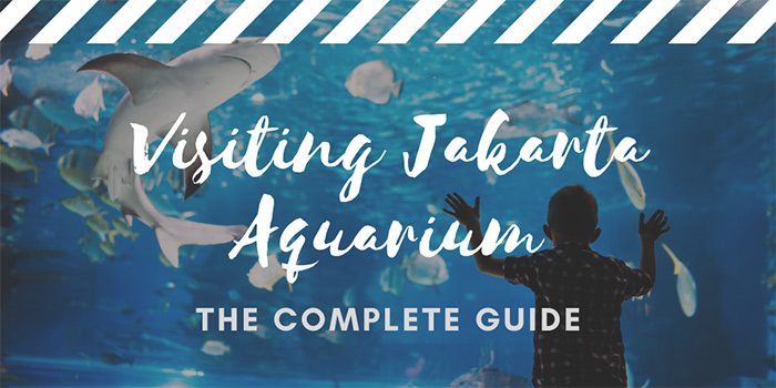Visiting Jakarta Aquarium: All You Need to Know